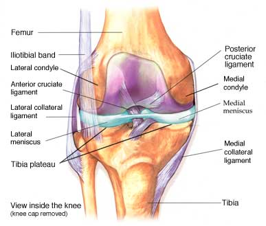 The Difference Between Acl And Mcl Tears Hrosm
